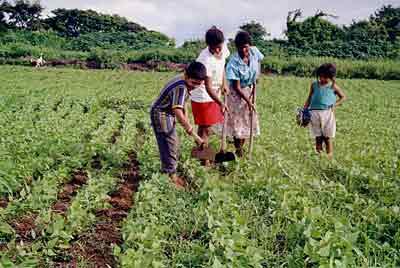 agricultura 11