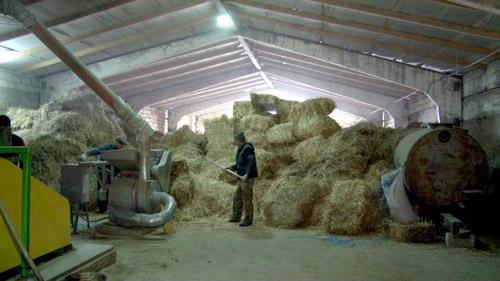 biomasa 2