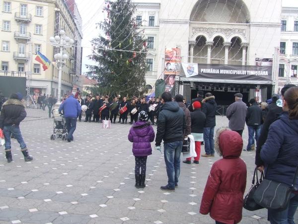 Timisoara in centru brad