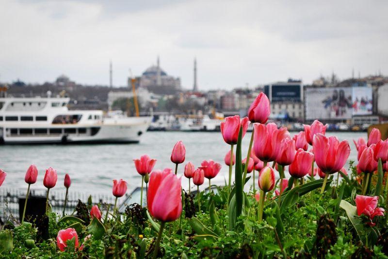 Festivalul-Lalelelor-la-Istanbul-2016-1
