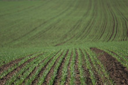 teren agricol 2